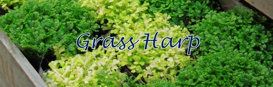 横浜港南台にある 花・カフェ・雑貨のお店「グラスハープ」の公式サイト